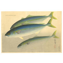 Bakufu Ohno: Young Yellowtail- Hamachi — ハマチ - Japanese Art Open Database