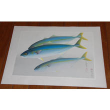 大野麦風: Young Yellowtail- Hamachi — ハマチ - Japanese Art Open Database