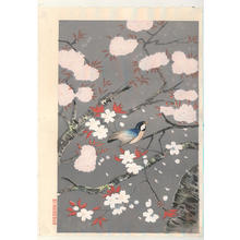 大野麦風: Bird and cherry blossoms - V1 — 桜と小鳥 - Japanese Art Open Database