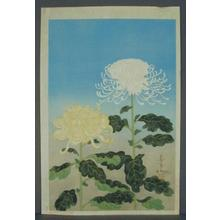 Bakufu Ohno: Chrysanthemums- Type 1- Variant 2 - Japanese Art Open Database