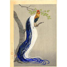 大野麦風: Long Tail Cock - Japanese Art Open Database