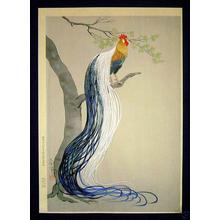 大野麦風: Long Tail Cock - Japanese Art Open Database