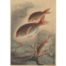 大野麦風: Red Bream- Tai - Japanese Art Open Database