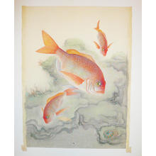 Bakufu Ohno: Snapper - Japanese Art Open Database