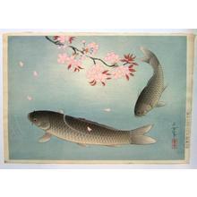 Bakufu Ohno: Sakura and Two carp — 桜に真鯉 - Japanese Art Open Database