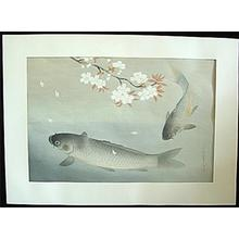大野麦風: Sakura and Two carp — 桜に真鯉 - Japanese Art Open Database