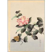 Bakufu Ohno: Unknown- Camellia - Japanese Art Open Database