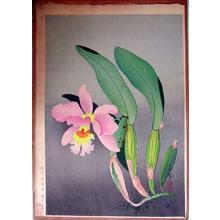 大野麦風: Western Orchid — 洋蘭図 - Japanese Art Open Database
