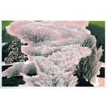 Chen Yuping: Moderate Breeze - Japanese Art Open Database