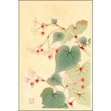 Fukuda Suiko: Begonias - Japanese Art Open Database