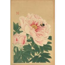 Fukuda Suiko: Peony and Bee - Japanese Art Open Database
