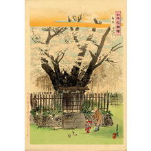 Ogata Gekko: Cherry Tree being admired by an old man with a small child - Japanese Art Open Database