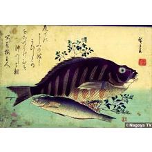 Utagawa Hiroshige: Unknown title — 魚づくしより しま鯛とあいなめ - Japanese Art Open Database