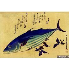 歌川広重: Unknown title — 魚づくしより 鰹に桜 - Japanese Art Open Database