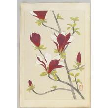 Ito Nisaburo: Magnolia - Japanese Art Open Database