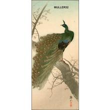 Ito Sozan: Peacock - Japanese Art Open Database