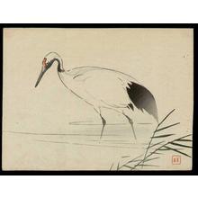 梶田半古: Japanese Crane - Japanese Art Open Database