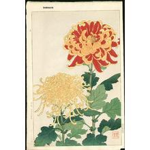 Kawarazaki Shodo: Chrysanthemum 2 - Japanese Art Open Database