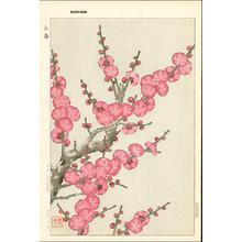 Kawarazaki Shodo: Crimson Plum - Japanese Art Open Database