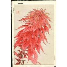 Kawarazaki Shodo: Hageitou- Red Amaranth - Japanese Art Open Database
