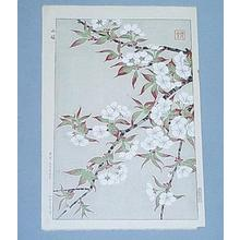 Kawarazaki Shodo: Mountain Cherry - Japanese Art Open Database