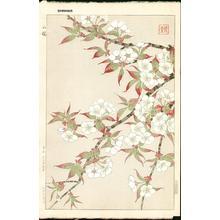 Kawarazaki Shodo: Mountain Cherry - Japanese Art Open Database