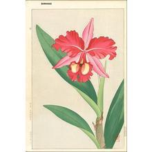 Kawarazaki Shodo: Orchid 1 - Japanese Art Open Database