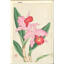 Kawarazaki Shodo: Orchid 2 - Japanese Art Open Database