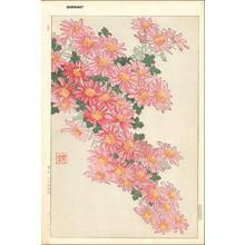 Kawarazaki Shodo: Pink Mum Cascade - Japanese Art Open Database