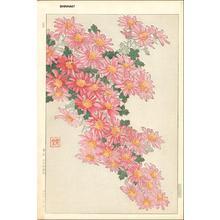 Kawarazaki Shodo: Pink Mum Cascade - Japanese Art Open Database