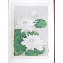 Kawarazaki Shodo: Water Lilies - Japanese Art Open Database
