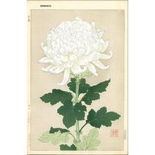Kawarazaki Shodo: White Chrysanthemum - Japanese Art Open Database