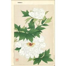 Kawarazaki Shodo: White Peonies - Japanese Art Open Database