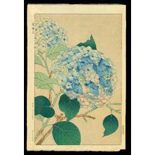 Kawarazaki Shodo: hydranga - Japanese Art Open Database