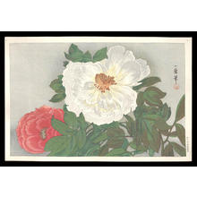 織田一磨: Peonies - Japanese Art Open Database