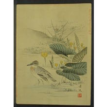 Keibun Matsumoto: Sandpiper in lake - Japanese Art Open Database