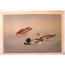 Keibun Matsumoto: Unknown, ducks in a pond - Japanese Art Open Database
