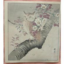 Keigetsu: Owl on Cherry Tree - Japanese Art Open Database