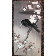 今尾景年: Crow and Cherry Blossoms - Japanese Art Open Database
