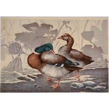 Kobayashi Kiyochika: Ducks and Dead Lotus — 鴨と枯蓮 - Japanese Art Open Database