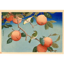 Kobayashi Kiyochika: Persimmon tree and a pair of Greenfinches - Japanese Art Open Database