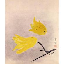 弦屋光渓: Fingered citron — 仏手柑 - Japanese Art Open Database
