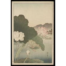古峰: A Frog on Lotus Leaf - Japanese Art Open Database