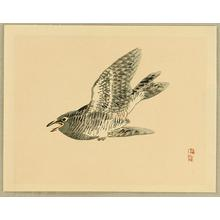 Kono Bairei: Cuckoo - Japanese Art Open Database