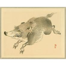 Kono Bairei: Wild Boar - Japanese Art Open Database