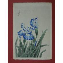 Kotozuka Eiichi: Iris — 花菖蒲 - Japanese Art Open Database