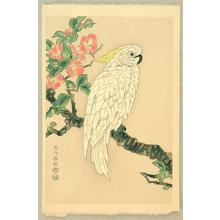 Kotozuka Eiichi: Parrot and Quince - Japanese Art Open Database