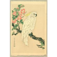 Kotozuka Eiichi: Parrot and Quince - Japanese Art Open Database
