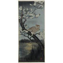 Narazaki Eisho: Owl and Cherry - Japanese Art Open Database