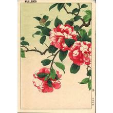 Nishimura Hodo: Camellia - Japanese Art Open Database